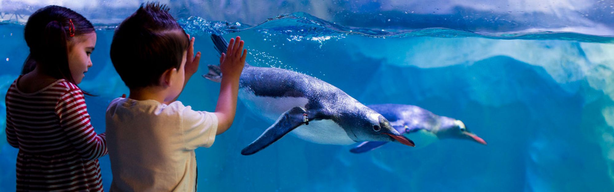 London Premium Ticket + SEA LIFE London Aquarium