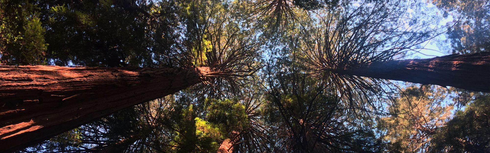 San Francisco Muir Woods Tour