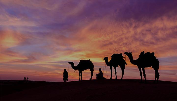 Kamele in der Abu Dhabi Wüste bei Nacht