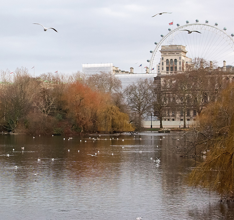 The River Thames and the London Eye with a backdrop of autumnal trees
