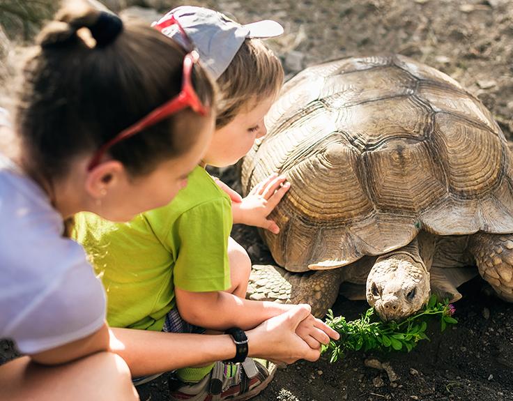 Kinder füttern Schildkröte