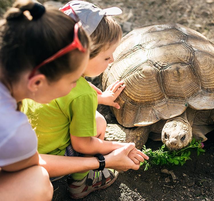 Kids feeding a turtle