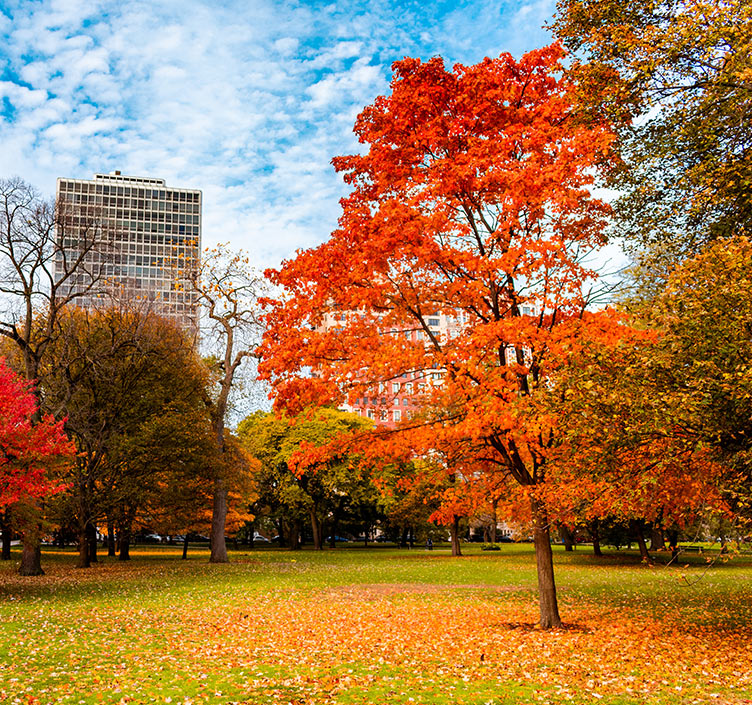 An autumn day in Lincoln Park, Chicago