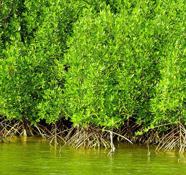 Mangrove Lagoon in Muscat