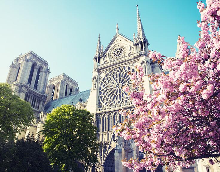 Kirschblüte, die ein Monument in Paris verziert