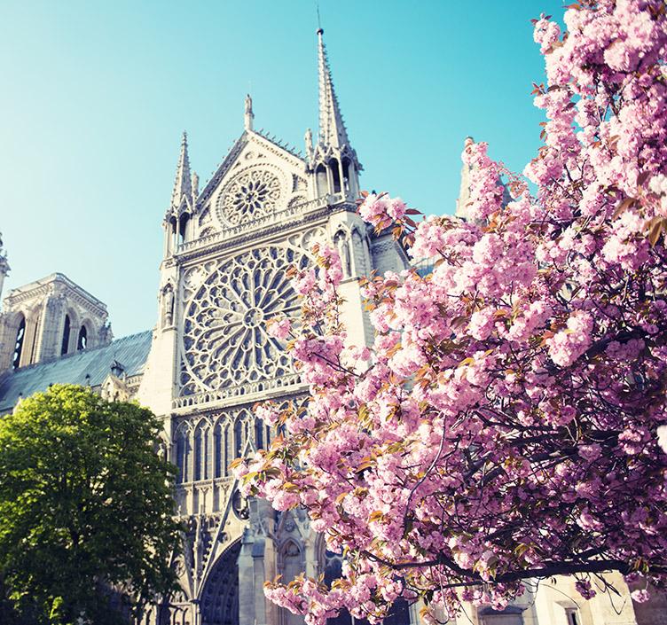 Cherry blossom decorating monument in Paris