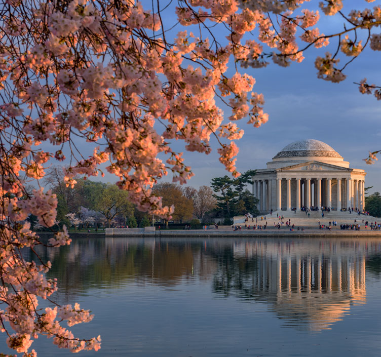 Washington DC's Jefferson Memorial framed by pink Cherry Blossoms