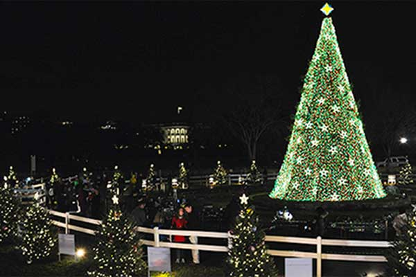 National US Christmas Tree
