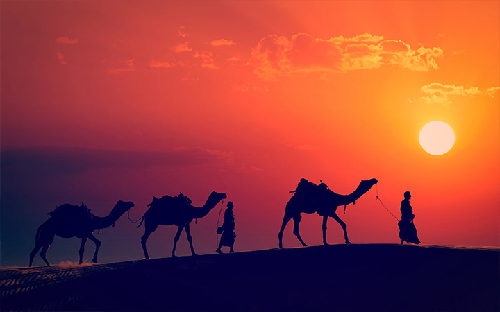 Camels on sand dunes at sunset