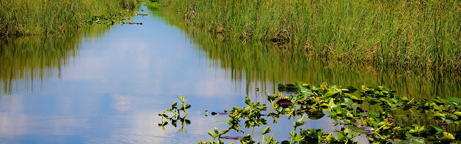 View of sawgrass and waterways in the Florida Everglades