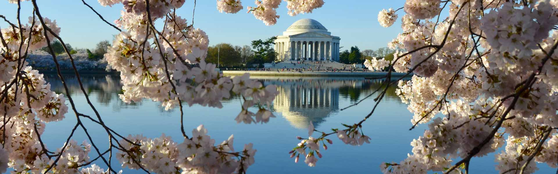 View of Jefferson Memorial through Cherry Blossoms