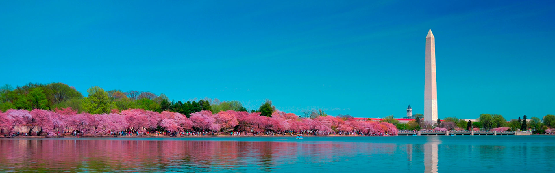 View of the Washington Monument and Cherry Blossoms across Tidal basin